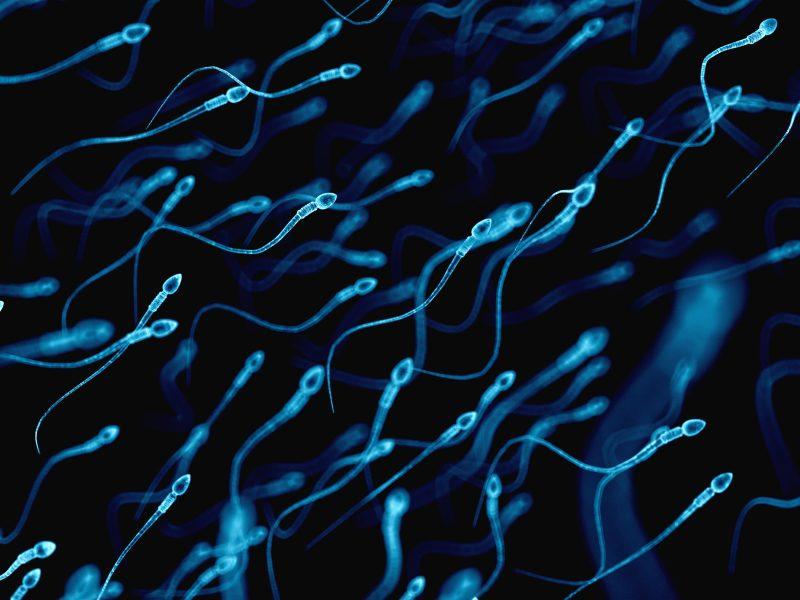 Los espermatozoides también envejecen